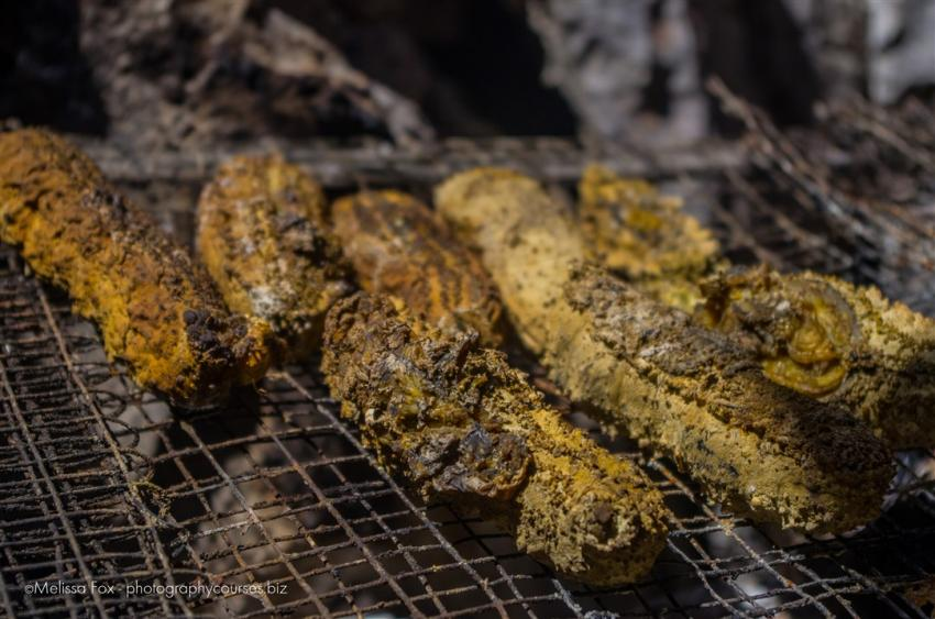 sea cucumbers tagbanua